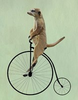 Meerkat on Black Penny Farthing Fine Art Print