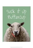 Suck It Up Buttercup Sheep Print Framed Print