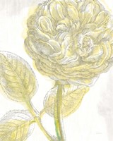 Belle Fleur Yellow III Crop Framed Print