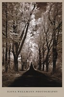 Country Road II Fine Art Print