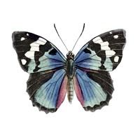 Butterfly Botanical II Framed Print