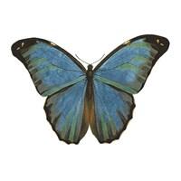 Butterfly Botanical III Fine Art Print