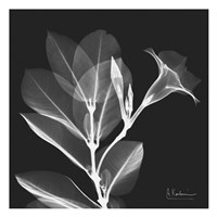 Mandelilla Shadow 1 Framed Print