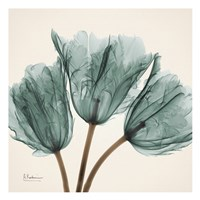 Tulip Sky Framed Print
