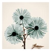 Chrysanthemum Sky Fine Art Print