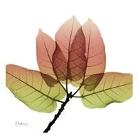FicusBurkey Fall Framed Print