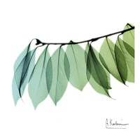 Camelia Leaf Fine Art Print
