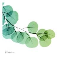 Eucalyptus Green Fine Art Print