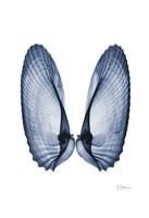 Angel Wings Fine Art Print