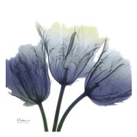 Midnight Tulips Trio Fine Art Print