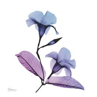 Mandelilla Purple 2 Fine Art Print
