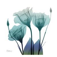 Gentian Buddies 2 Fine Art Print