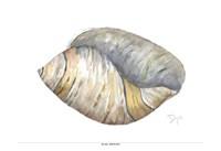 Sea Shell Neutral 1 Fine Art Print