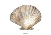 Sea Shell Neutral 2 Fine Art Print