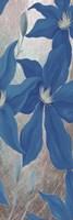 Blue Clematis Cavees II Framed Print