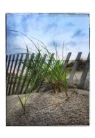 Beach Grass With Fence And Border Fine Art Print