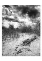 Wood Beach Sky BW Fine Art Print
