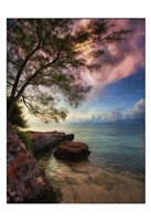 Vertical Tree And Water With Worder Fine Art Print