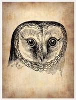 Vintage Owl Fine Art Print