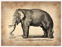 Vintage Elephant Fine Art Print