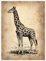 Vintage Giraffe Fine Art Print