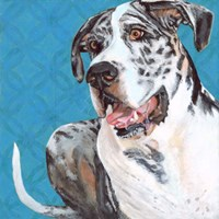 Dlynn's Dogs - Apollo Fine Art Print