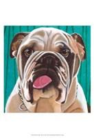 Dlynn's Dogs - Bosco Fine Art Print