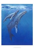 Under Sea Whales I Fine Art Print