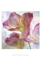Pink Hyacinth I Fine Art Print