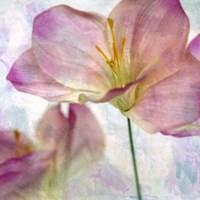 Pink Hyacinth II Fine Art Print