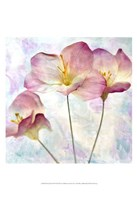 Pink Hyacinth IV Fine Art Print