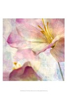 Pink Hyacinth V Fine Art Print