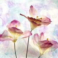 Pink Hyacinth VI Fine Art Print