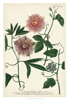 Antique Passion Flower I Fine Art Print
