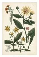 Saffron Garden I Fine Art Print
