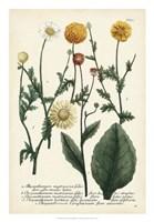 Saffron Garden II Fine Art Print