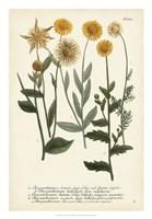 Saffron Garden III Fine Art Print