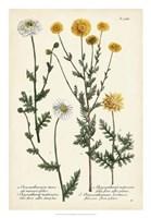 Saffron Garden IV Fine Art Print