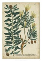 Weinmann Foliage & Fruit IV Fine Art Print