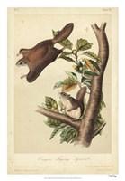 Audubon Squirrel IV Fine Art Print