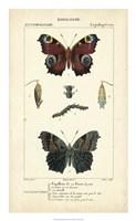 Antique Butterfly Study II Fine Art Print