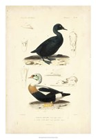 Antique Duck Study I Fine Art Print