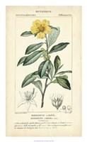 Botanique Study in Yellow I Fine Art Print