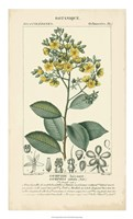 Botanique Study in Yellow II Fine Art Print