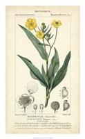 Botanique Study in Yellow III Fine Art Print