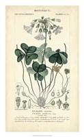 Botanique Study in Lavender I Fine Art Print