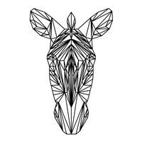 Zebra on White Fine Art Print