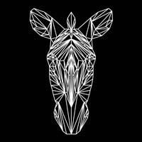 Zebra on Black Fine Art Print