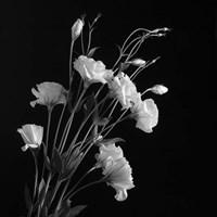 White Flowers Gray Fine Art Print