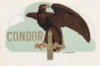 Condor Fine Art Print
